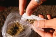 نام گل در قانون مبارزه با مواد مخدر وجود ندارد