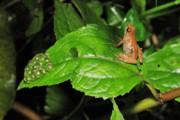 کشف گونه جدیدی از قورباغهها در کوههای اتیوپی