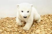 عکس روز | بچه خرس قطبی