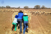 اثرات منفی خشکسالی بر سلامت روان کودکان استرالیایی