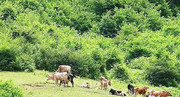 ۳۰ سال آینده جنگلی در شمال کشور نخواهیم داشت