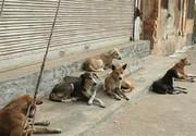ماجرای کشتار سگهای ساوجبلاغ با سیانور