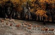 افتتاح باغ راز هستی و کاشت ۱۲۰ هزار درخت