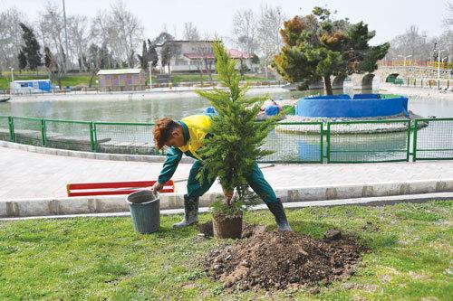 ۲میلیون درخت، مهمان تازهی تهران