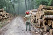 استفاده بیرویه کاغذ توالت در آمریکا، تهدیدی برای جنگلهای کانادا