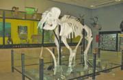 بازدید رایگان از موزه تنوع زیستی پارک طبیعت پردیسان