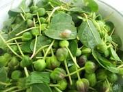 خواص ضدسرطانی گیاهی فراوان ولی ناشناخته