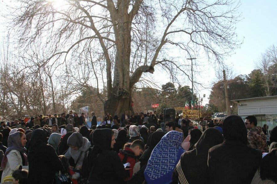 جشن تولدی برای درخت کهنسال کرمانشاه