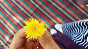 «بهار من» و چند شعر دیگر