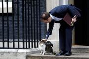عکس روز | گربه نخستوزیری