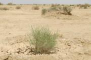 ۳۵۰ هزار هکتار مراتع گلستان در معرض بیابانی شدن است