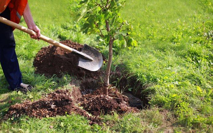 کاشت نهال درخت