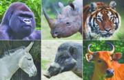 خطر انقراض قطعیِ ۱۲۰۰ گونه جانوری در جهان