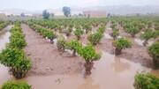 سیل؛ بیش از ۲ هزار میلیارد تومان به بخش کشاورزی خسارت زد
