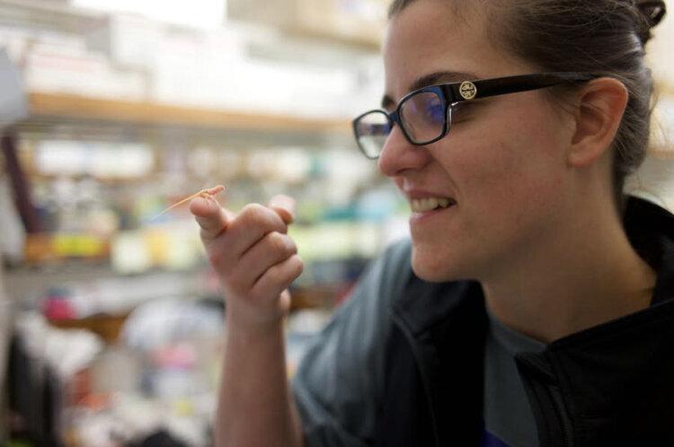 تولد نخستین مارمولکهای مهندسی ژنتیکی شده جهان