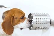 سگها سرطان را بو میکشند