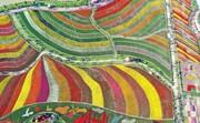 عکس روز: لالههای رنگارنگ
