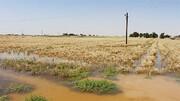 وزیر جهادکشاورزی: خسارات کشاورزان خوزستان را جبران میکنیم |  حجم خسارات بالاست