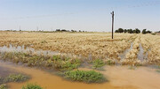 خسارت ۱۶۵ میلیارد تومانی کرونا و سیل به کشاورزی قم