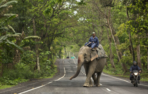 پارک ملی آسام هند