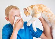 نکته بهداشتی: آلرژی به حیوانات