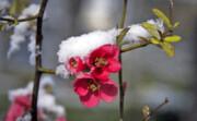 بهار اردبیل رنگ زمستان گرفت