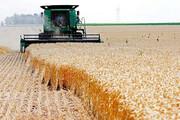 ۵ درصدمزارع گندم در سیلهای اخیر دچار خسارت ١٠٠ درصدی شد