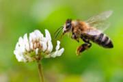 زنبورهای ریاضیدان