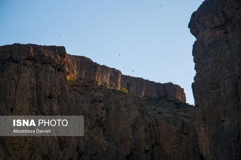 پرنده های زیادی در طول رودخانه و صخره های تنگ بُراق آشیانه دارند