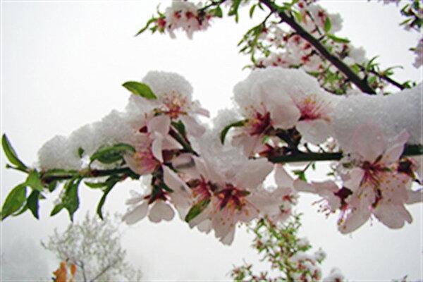 سرما درخت