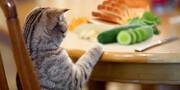 نکته بهداشتی: غذاهایی که نباید به حیوانات خانگی داد
