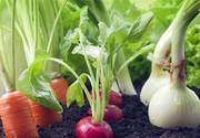سازمان غذا و دارو: هر محصولی که در زمین بدون سم و کود، کشت شود ارگانیک نیست