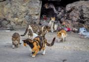 استرالیا به جنگ دو میلیون گربه خیابانی میرود