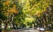 فواید شگفتانگیز زندگی در کنار درختان