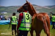 جشنواره ملی زیبایی اسب اصیل ترکمن