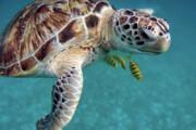 یک میلیون گونه جانوری و گیاهی در معرض نابودی است