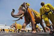 عکس روز: فیلهای سلطنتی