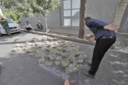 لانه دهها پرنده در هرس بیموقع درختان شیراز تخریب شد