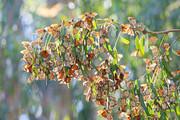 چرا پروانههای تهران زیاد شدند؟
