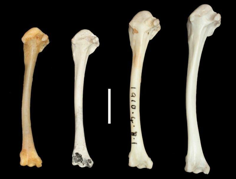 احیای پرنده منقرض شده پس از چند هزار سال