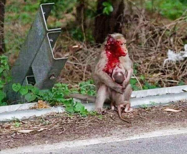 ميمون مادر مرگ