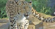 کاهش بیسابقه جمعیت پستانداران در جنگلهای جهان