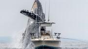 نهنگ غول پیکر در سواحل کالیفرنیا