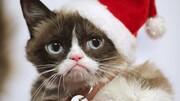 «گربه اخموی» اینترنت در ۷ سالگی درگذشت