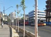 رخت صورتی بر تن درختان خیابان ولیعصر (عج)
