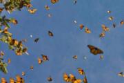 پروانهها تا کی مهمان تهران هستند؟