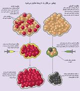 اینفوگرافیک | چطور سرطانها به داروها مقاوم میشوند؟