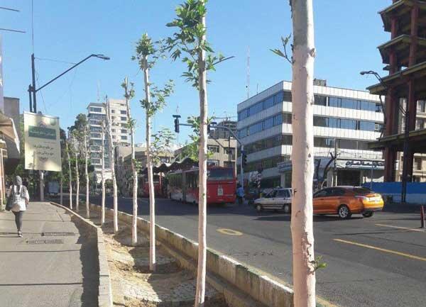 درختان صورتی خیابان ولیعصر