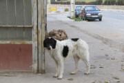 واکنش شهرداری تهران به سگکشی