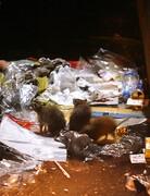 ورود نانو پودرهای غیرسمی به میدان مبارزه با موشهای تهران